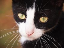 gato-preto-e-branco-fim-acima-29473544